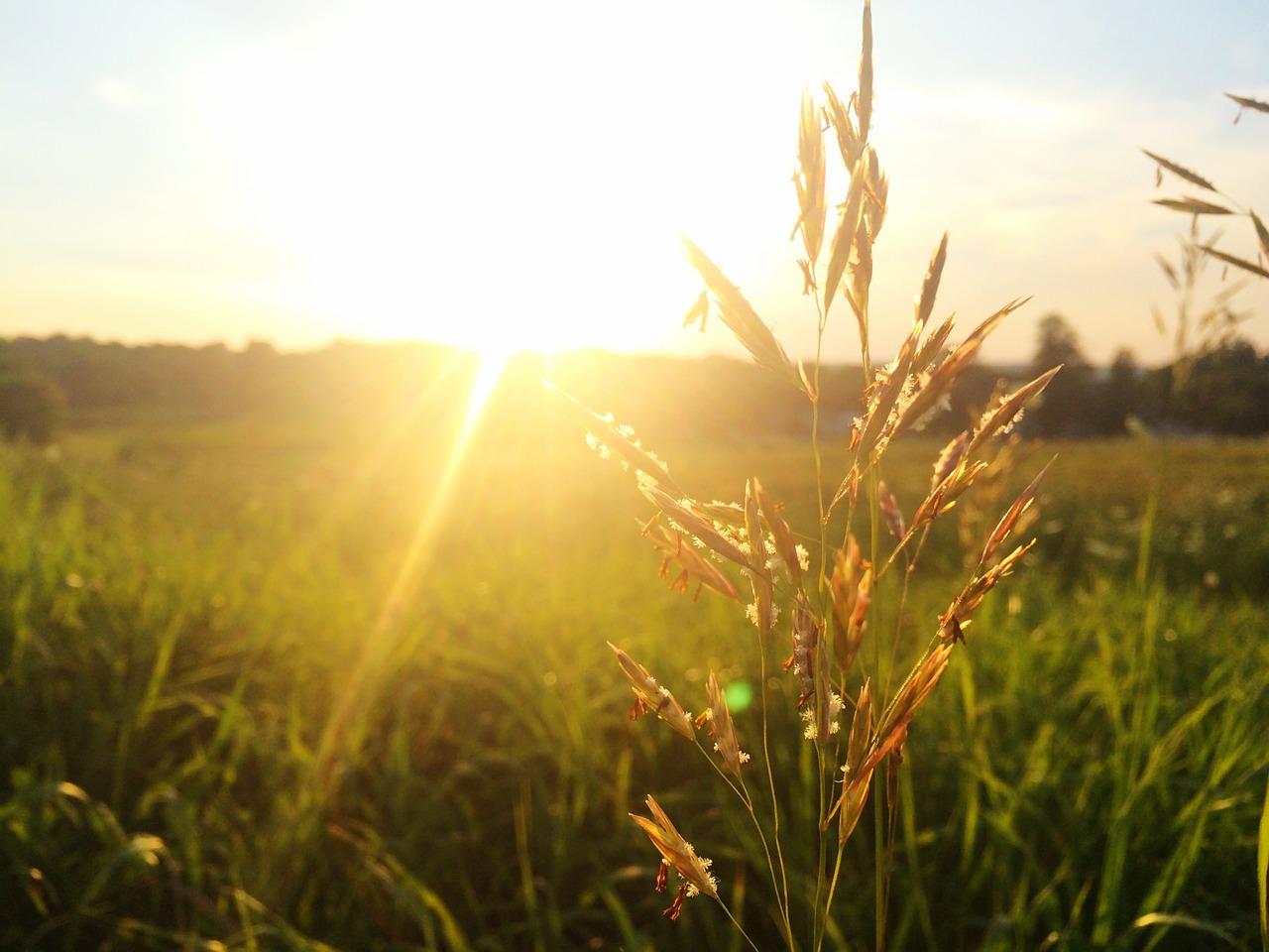 小麦によるアレルギー症状、及び疾患について